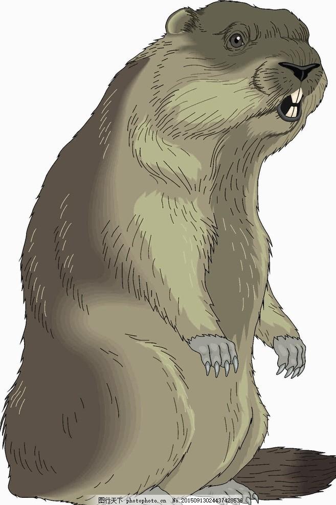 土拔鼠 鼠 动物 可爱 地鼠 田鼠 钻地洞 设计 生物世界 野生动物 cdr