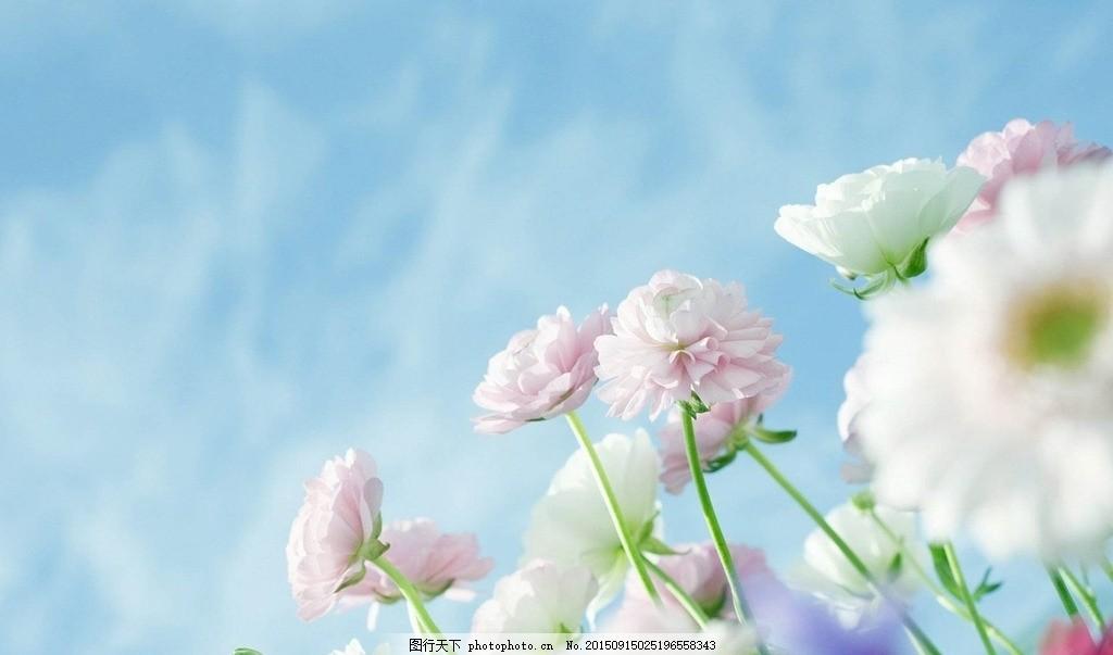 唯美手绘花丛黑白