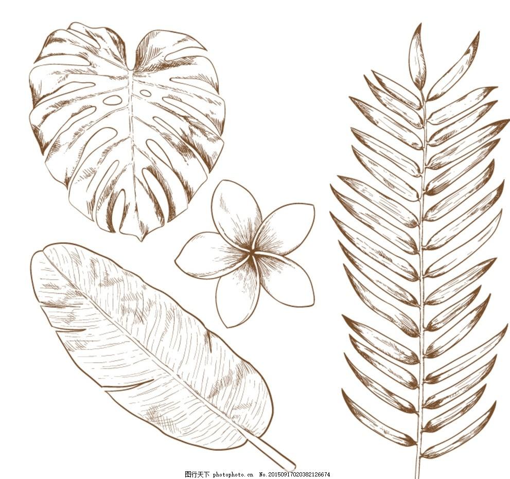 4款手绘热带植物矢量素材