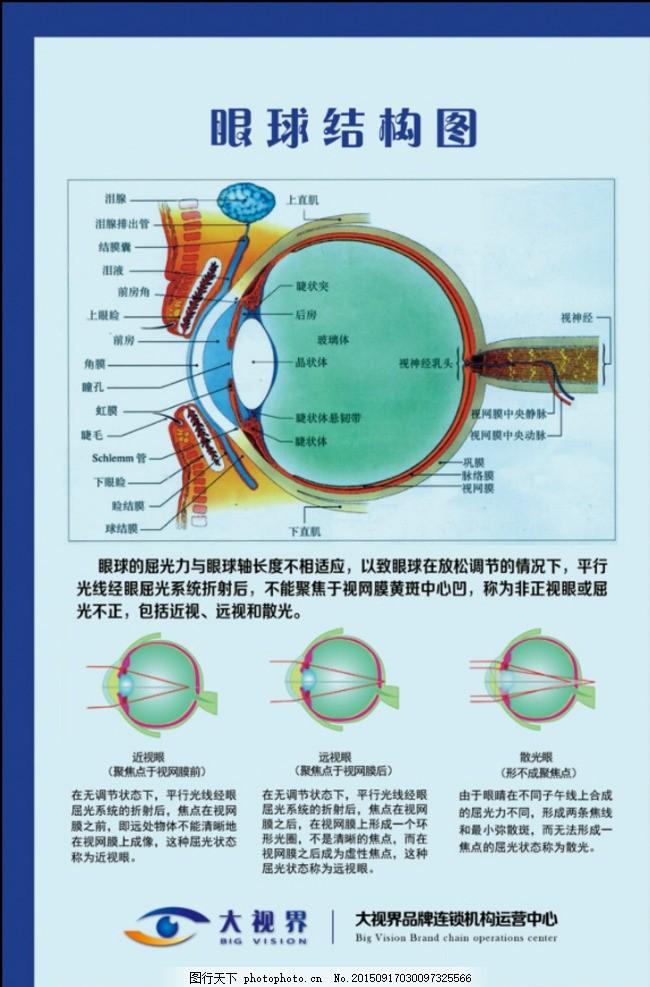 眼部结构图
