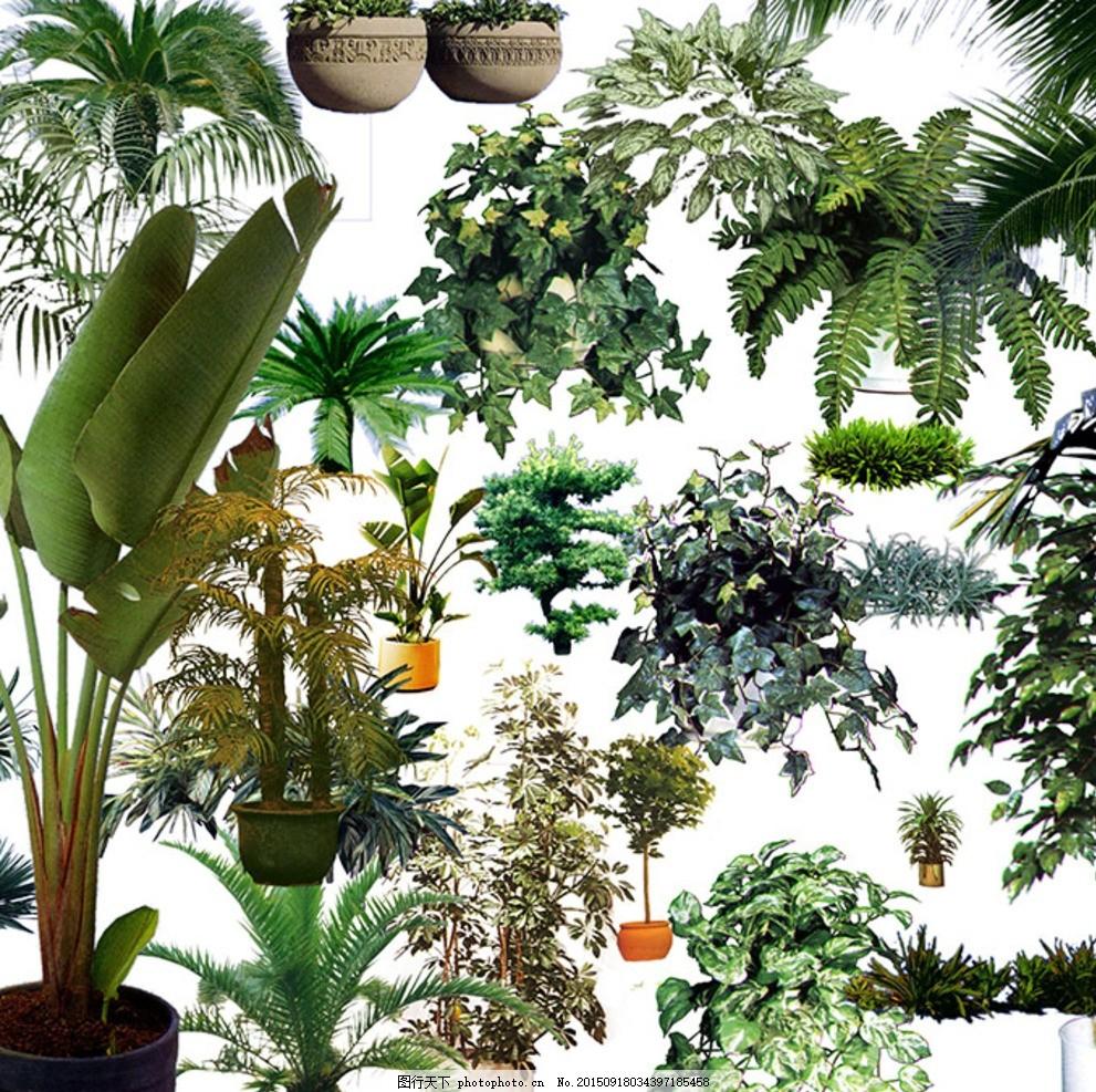 绿植 树木 盆栽 植物 花卉