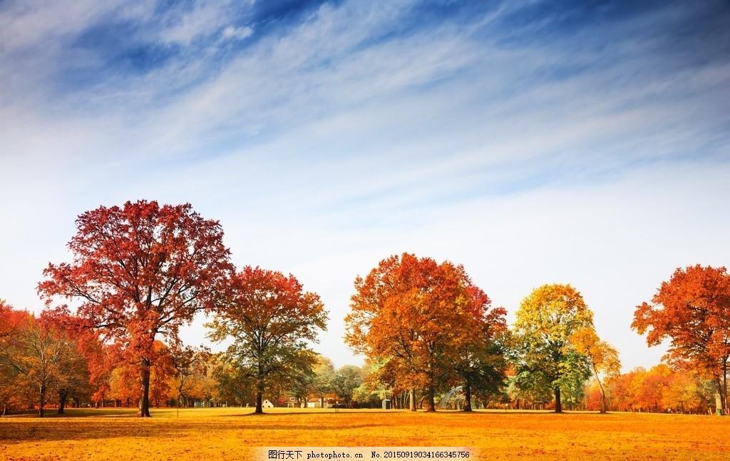 秋天 秋季 金色 草地 大树 树林 森林 户外 野外 公园 自然 美丽自然