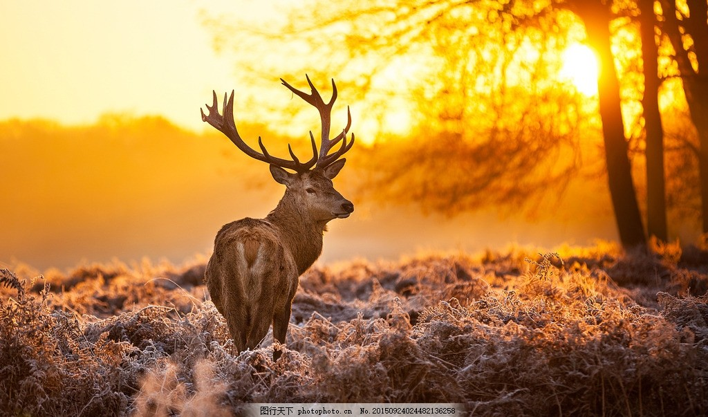鹿 草原 麋鹿 鹿群 动物 树林 森林 小草 天空 草地 动物世界