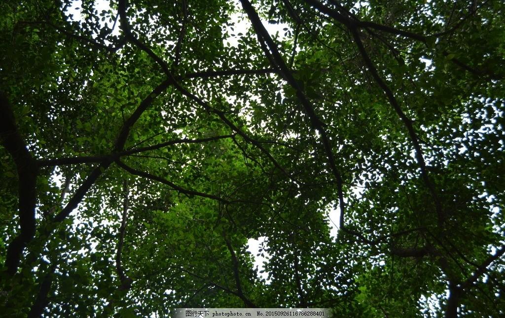 树影 树木 风景 天空 天顶 仰望天空 摄影 自然景观 自然风景 300dpi