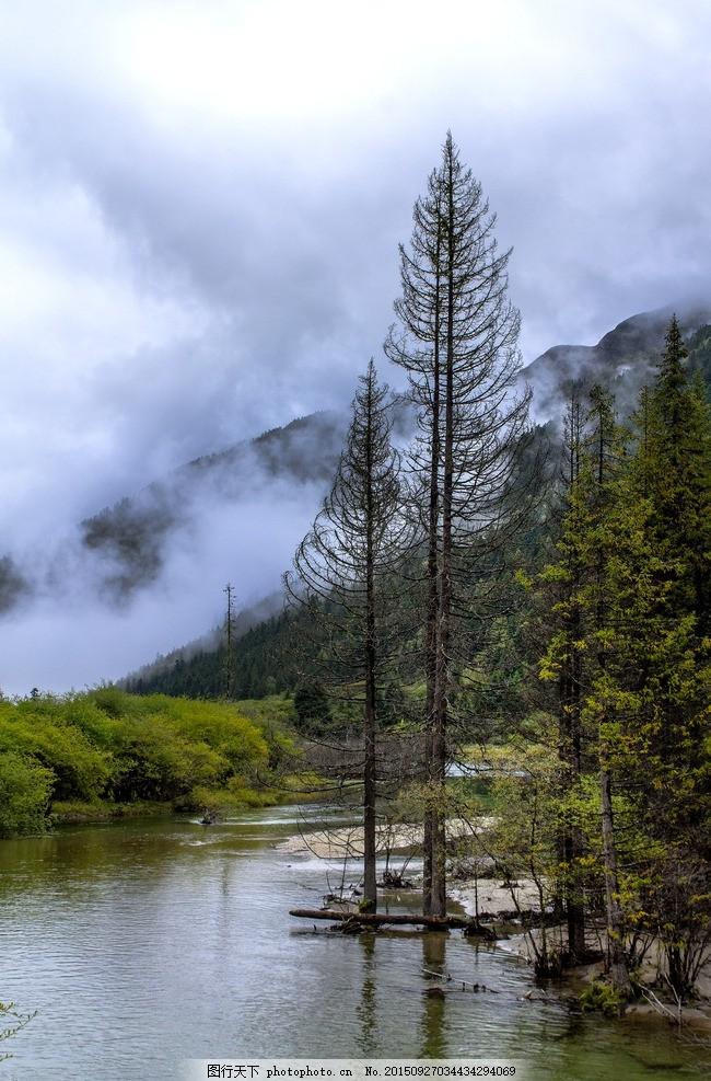 原始森林 湖泊 湿地 森林公园 树木 枯树 高原湖泊 自然风景