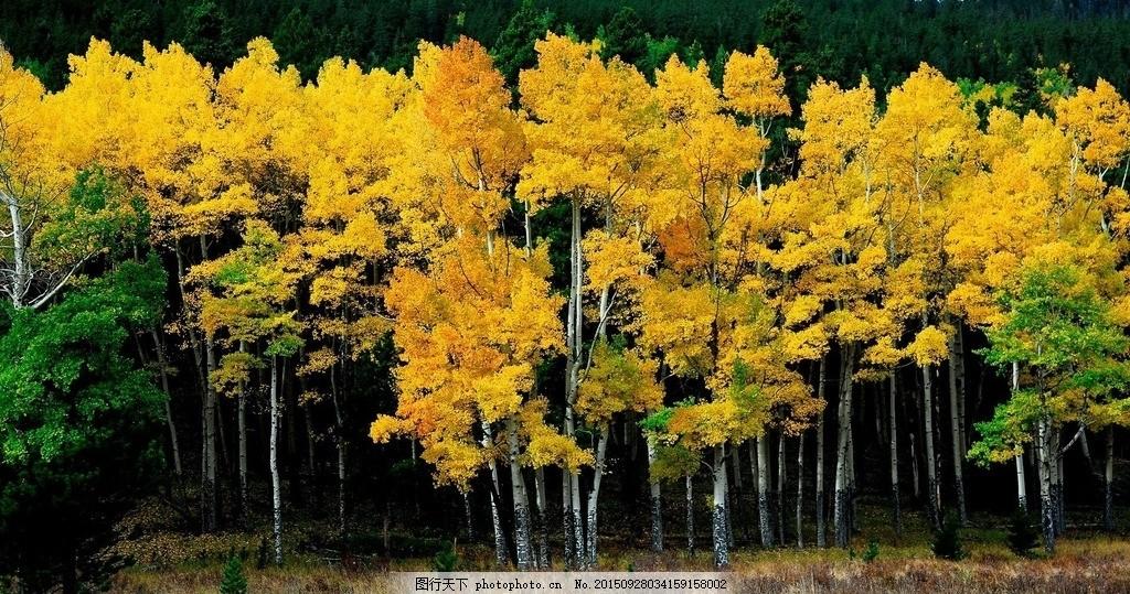 秋景 摄影 风景 横幅 大自然