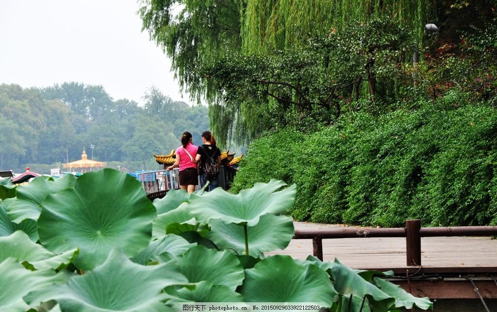 荷花 玄武湖 莲花 绿叶 风景名胜 旅游 旅游景点 摄影 人文景观