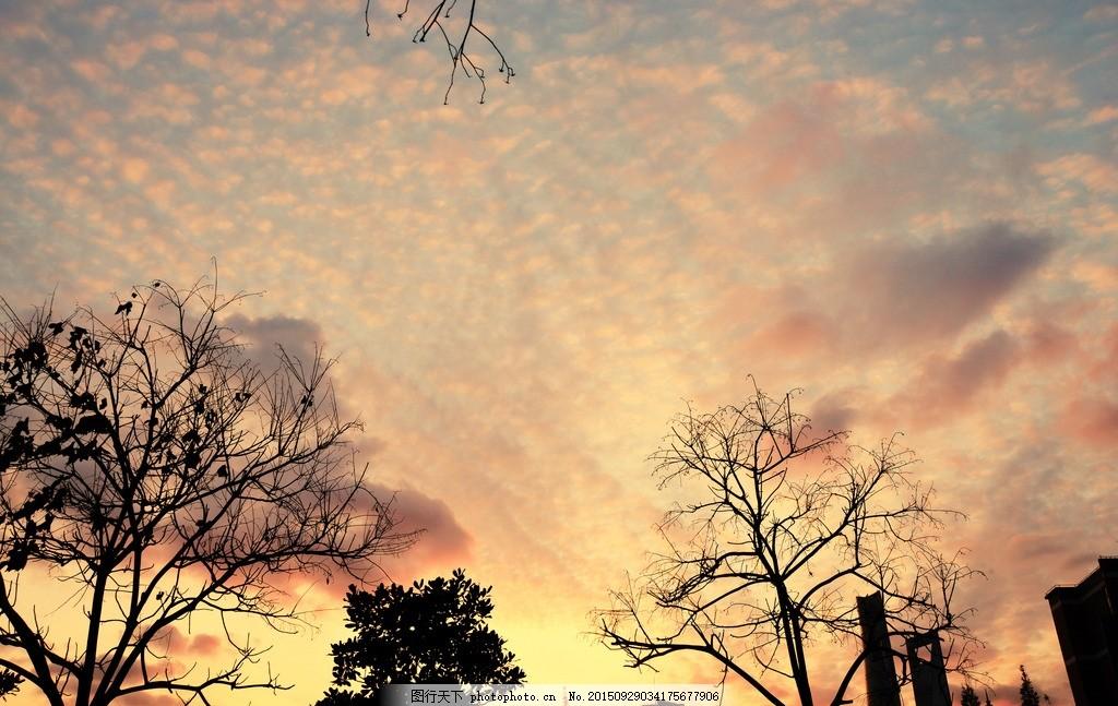 背景 桌面 摄影 随拍 意境 屏保 黄昏 花 摄影 自然景观 自然风景 72
