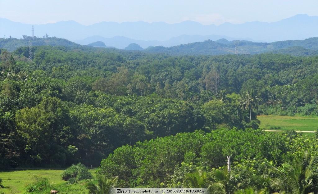 森林 树林 原始森林 森林公园 海南风光 海南琼中 自然风光 摄影