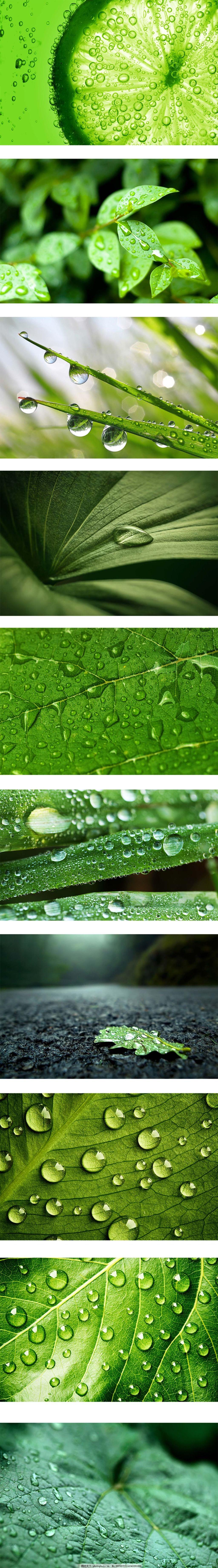 挂满水滴的绿叶,露珠,水珠,晨露,植物,摄影绿叶,叶子