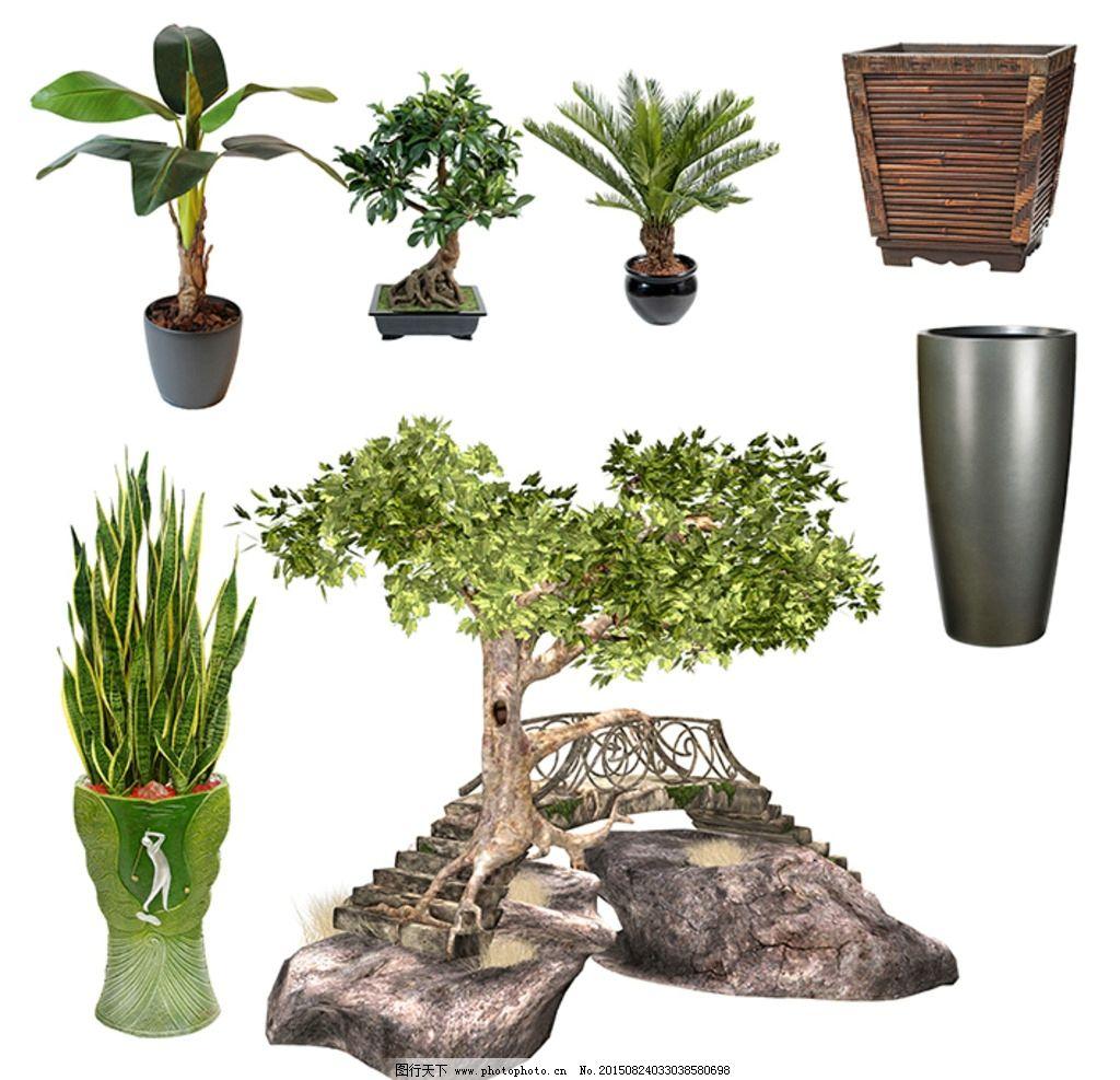 家居绿色植物 绿化植物 花盆 花瓶 盆栽 虎皮兰 铁树 树 石